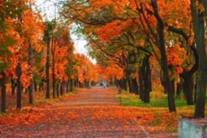 Autumn in Idaho inspires home builders and remodelers as the construction season changes.. Aspens and maples are signature trees in the state, which transform multiple forests of Idaho into a beautiful blaze of color. Whether in a city or the mountains, autumn in Idaho unfolds its patchwork blanket to the delight .of nature lovers